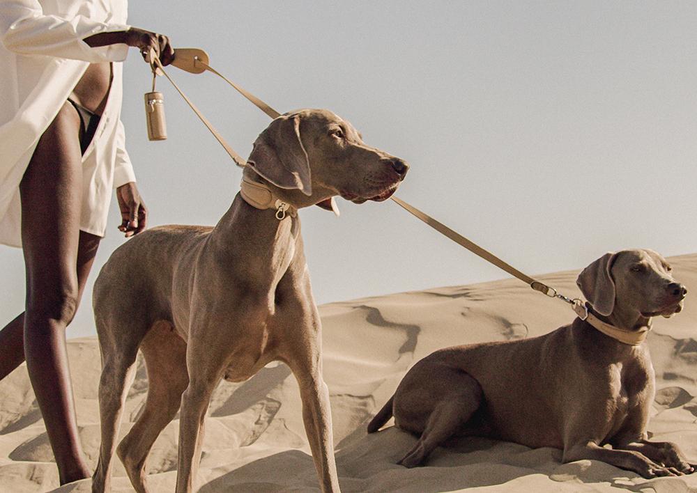 Pagerie_dog_accessories_pets_design_kutya_nyakörv_hám_póráz_luxus
